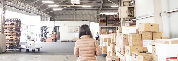 熊本、そして九州の「青果」のフロンティア企業(株式会社 藤本物産)